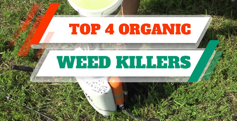 All Natural organic weed killer